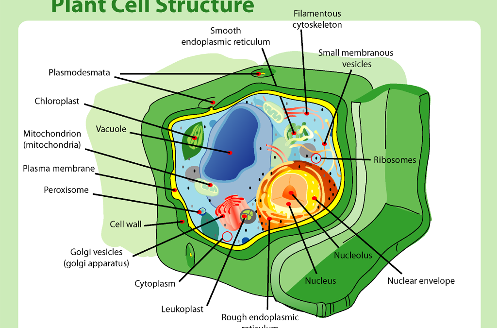 A Simple Review – The Plant Cell
